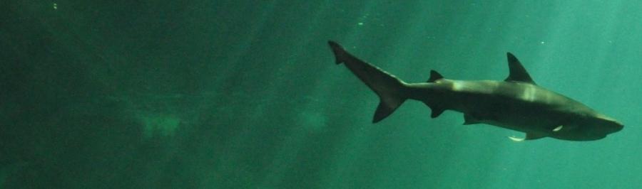 サメ 何類?